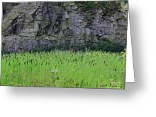 Sea Of Cattails Greeting Card