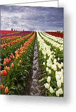 Sea Of Color Greeting Card