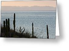 Sea Of Cortez Greeting Card