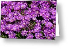 Sea Of Flowers Greeting Card