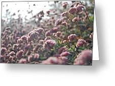 Sea Of Pink Greeting Card