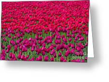 Sea Of Tulips Greeting Card
