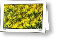 Sea Of Yellow Greeting Card