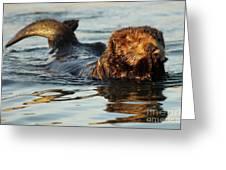 Sea Otter A Bit Embarrassed Greeting Card