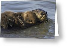 Sea Otter Mother With Pup Monterey Bay Greeting Card by Suzi Eszterhas