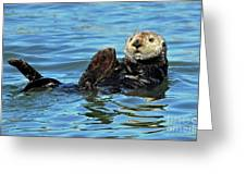 Sea Otter Primping Greeting Card