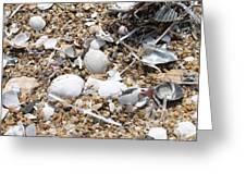 Sea Ribbons And Shells Greeting Card