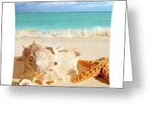 Sea Shell Seashell Clam Beach Decorative Square Zippered Throw Pillow Greeting Card