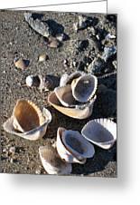 Sea Shells At Folly Beach In Charleston Sc Greeting Card