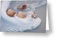 Sea Shells In A Wave Of Foam Greeting Card