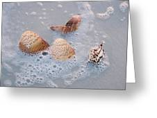 Sea Shells In An Ocean Wave Greeting Card