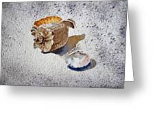 Sea Shells Greeting Card