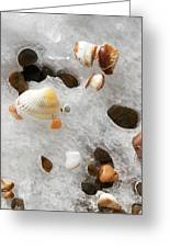 Sea Shells Rocks And Ice Greeting Card by Matt Suess
