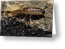 Isopod Greeting Card by April Wietrecki Green