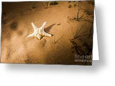 Sea Star Scene Greeting Card