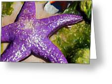 Sea Stars Greeting Card