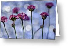 Sea Thrift Blossoms Greeting Card