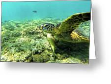 Sea Turtle #2 Greeting Card