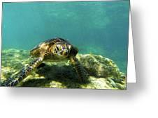 Sea Turtle #3 Greeting Card