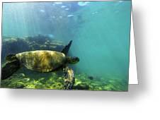 Sea Turtle #5 Greeting Card