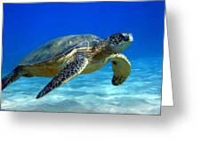Sea Turtle Blue Greeting Card
