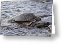 Sea Turtle On Rock Greeting Card