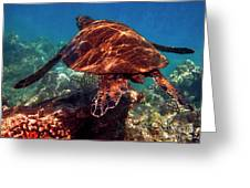 Sea Turtle On The Reef Greeting Card by Bette Phelan