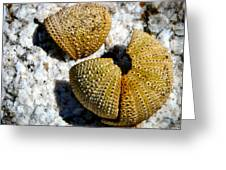 Sea Urchin Puzzle Pieces Greeting Card
