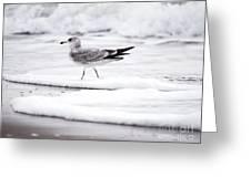 Seabird  Greeting Card