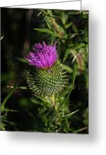 Seacoast Wildflower I Greeting Card