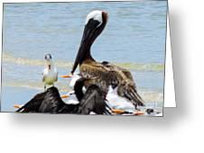 Seafaring Trio Greeting Card