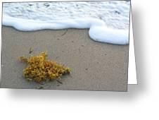 Seafoam And Seaweed Greeting Card