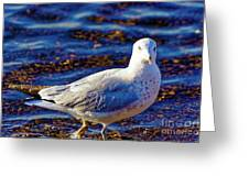 Seagull 1 Greeting Card