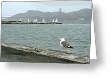 Seagull And Golden Gate Bridge Greeting Card