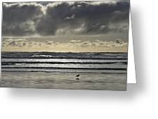Seagull At Cannon Beach Greeting Card