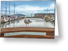 Seagull At Pier 39 Greeting Card