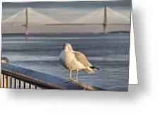 Seagull At Ravenel Bridge Greeting Card