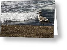 Seagull At The Beach Greeting Card