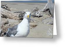 Seagull Bird Art Prints Coastal Beach Driftwood Greeting Card