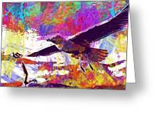 Seagull Birds Flight Wings Freedom  Greeting Card