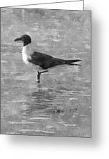 Seagull Black And White Greeting Card