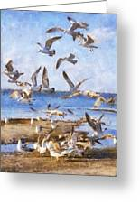 Seagull Convention Greeting Card