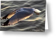 Seagull Flight Greeting Card by Dustin K Ryan