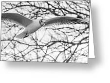 Seagull Fly By Trees Greeting Card