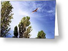 Seagull Fly By Wc 2 Ae  Greeting Card