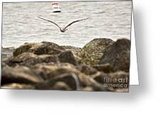 Seagull Flying Into Ocean Jetty Greeting Card