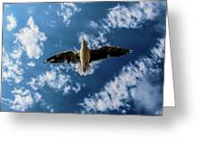 Seagull Flying  Greeting Card