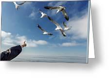 Seagull Flying Greeting Card by Pradeep Raja PRINTS