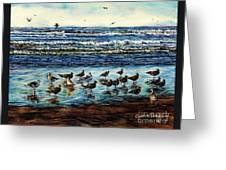 Seagull Get-together Greeting Card
