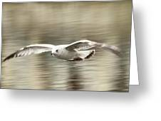 Seagull Glide Greeting Card
